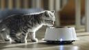 Котята и кошки: едим правильно — WHISKAS® К.Т.У.