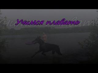 Доберман. Как мы учились плавать /Doberman. How did we learn to swim