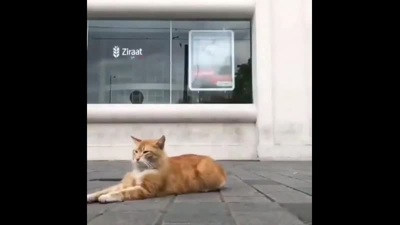 Street cats in Istanbul are cherished They can lay on the sidewalk and get love from passersby without fear Some restaurants e