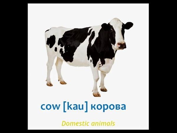 English-Russian picture dictionary for kids.Hammasi bolalar uchun. Suratlar bilan hayvonning nomi.