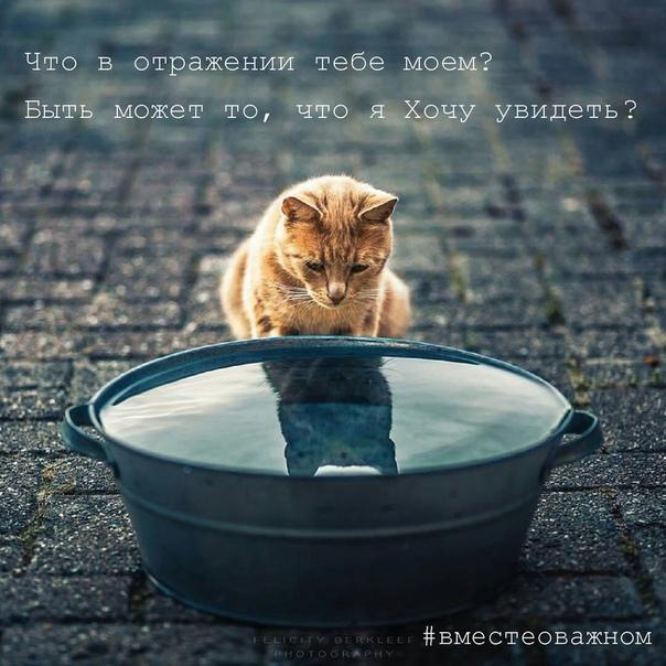 Наше отражение не всегда воспринимается из реальности