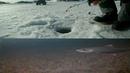 Подледная ловля хариуса на муху в озере, подводные съемки. Рыбалка на хариуса в Мурманской области