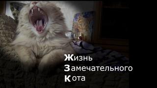 Жизнь замечательного кота