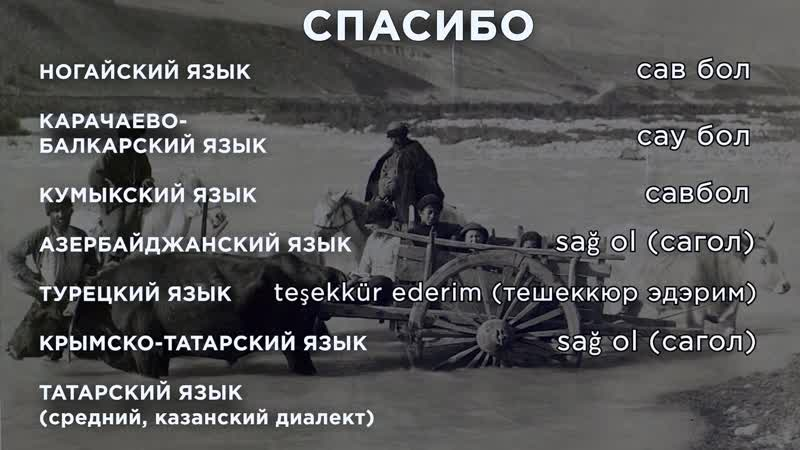 Тюркская языковая семья ногай, карачай-балкар, кумык, азербайджан, турок, татарин, крым-татарин