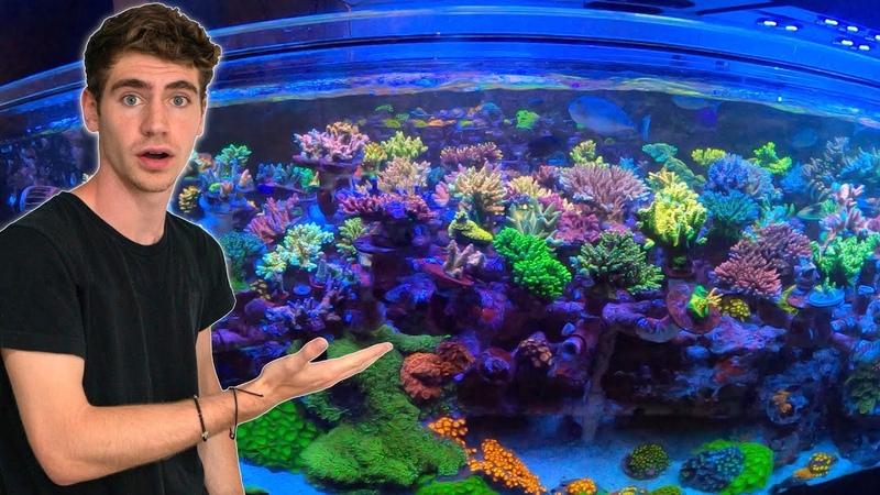 Private Tour of 30,000 GALLON Reef Aquarium SPS Dominant Coral Farm!! - (Top Shelf Aquatics)