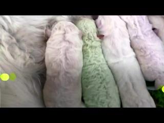 Видео от DogSelf, Кинологический развивающий центр