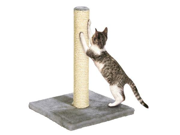 Если у вас скоро появится кошка, изображение №3