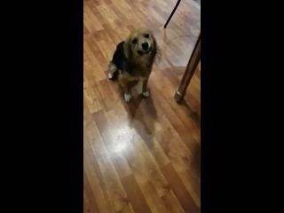 Video by Добра питомцам. Крымск. Краснодарский край