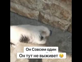 Viktoriya Aleksandrovatan video