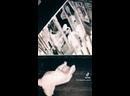 Квест - проект Безумие. Саратов Запись на игры 📞34-96-97 Мы в Instagram instagram/bezymie64 Наш сайт questsaratov