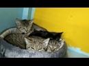 Сусанинские котята ищут дом
