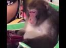 Mister monkey memes