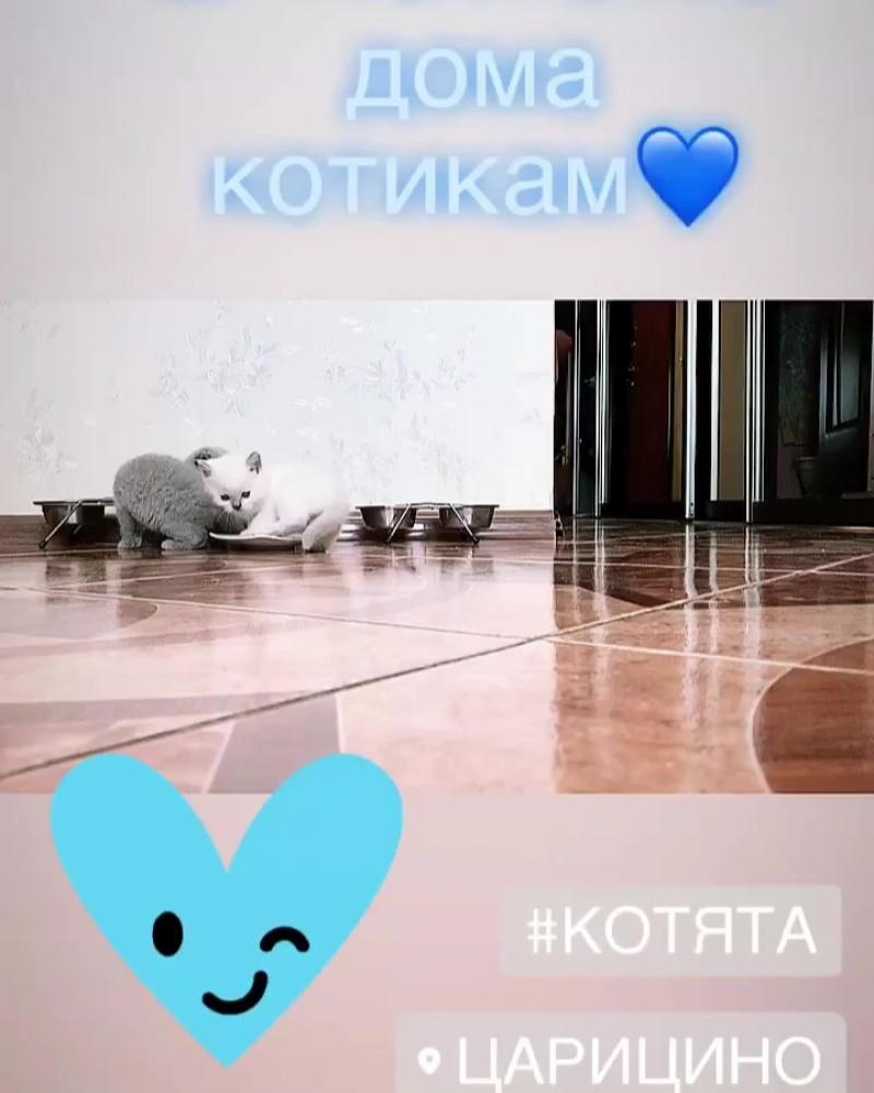 Видео от Натальи Котяты