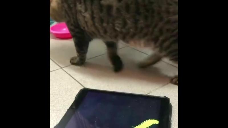 Котик валяется