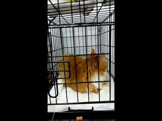 Видео от Ветеринарная клиника Нэнси