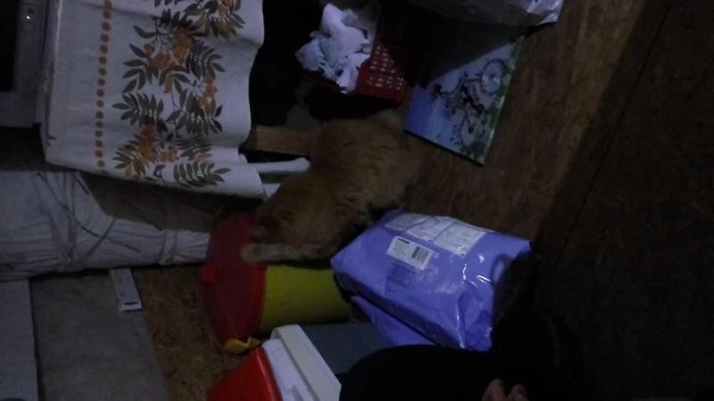 Котя добывает себе шоколадку-собачий корм