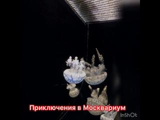 Приключения в Москвариум
