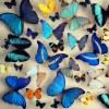 Бабочки в рамках, насекомые в кубах