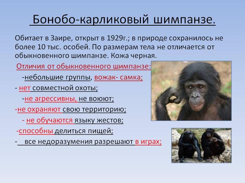 Насколько я знаю, бонобо не глупее шимпанзе и прекрасно обучаются языку жестов, но остальное вроде правда
