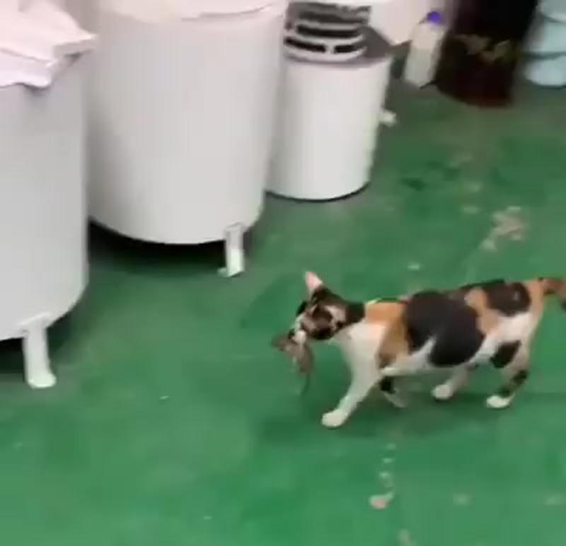 Кошка кормит мышку