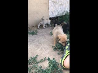 Video by Anzhelika Ivashechkina