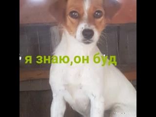 Видео от Отдам животных в Краснодаре и Кр. крае