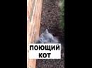 Video_0218_232604.mp4