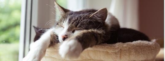 Почему кошки так долго спят? ~ Коточек