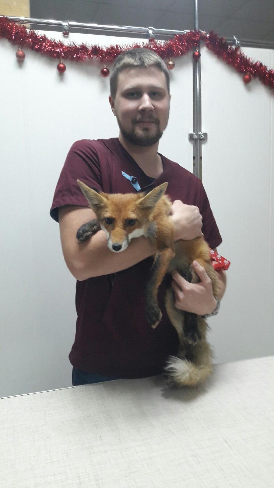 Сегодня у ветеринарного врача и спасителя бездомных