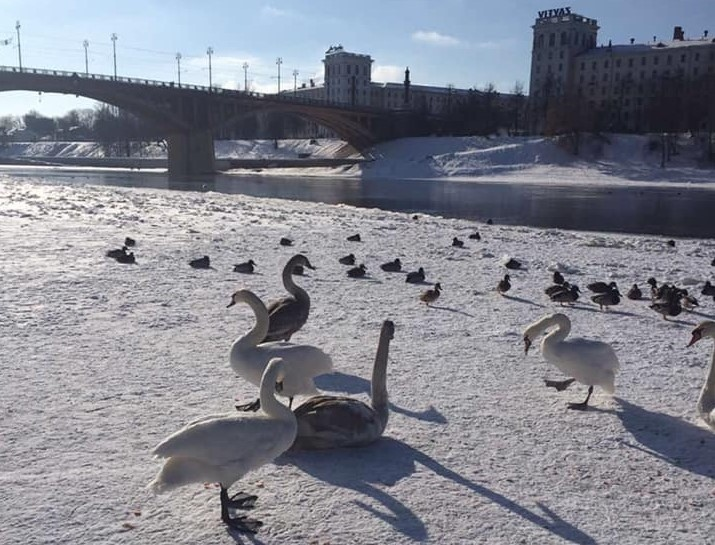 В Витебске отец с малышом кормили птиц и упали в реку. Их спас парень — теперь е...