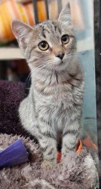 Самый ласковый, умный, игривый котенок по имени Яш...