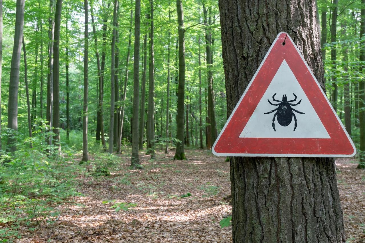 В лес не ходить - клещей не ловить