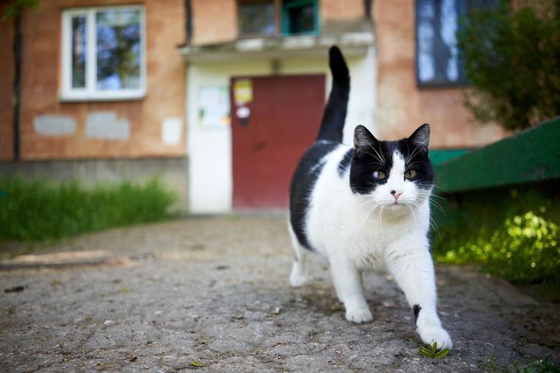 Коты Бориса Панкина 5jFX1fYO2B8