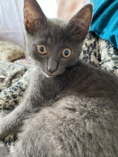 Потерялся котёнок, может видел ктоСерый, ещё мален...