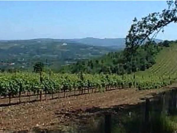 Vladeta Kandić - Pesma o vinogradu