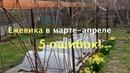 ЕЖЕВИКА в марте - апреле /5 ОШИБОК!