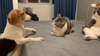 Кот вообще · #coub, #коуб