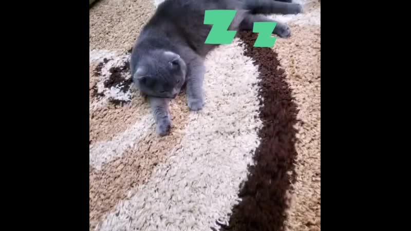 Стирка ковров в Дулито