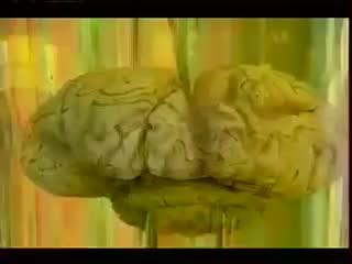 """Передача на ТВ """"ЗДОРОВЬЕ с Еленой Малышевой"""". О необходимости употребления Омега - 3 Жирные кислоты для здоровья."""