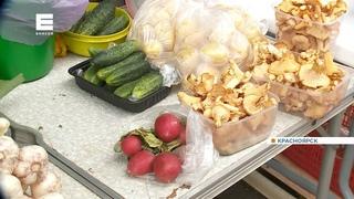 Жители Красноярского края собирают первый урожай грибов