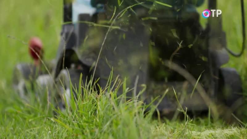 Секреты сада 2 серия У животных время размножаться Им важно и позаботиться о потомстве и защититься от хищников