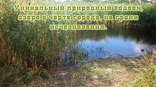 Мозырь. Бобровское озеро природный водоем на грани исчезновения. Экология