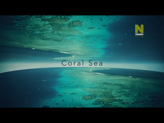 Большой Барьерный риф: Живое сокровище - Коралловое море   4 серия из 4   2020   HD 720