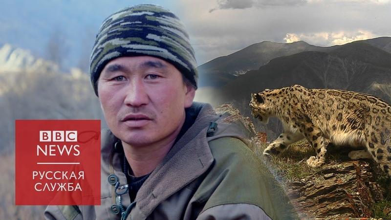 Кот на миллион как охотники стали хранителями снежного барса на Алтае