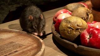 Новая выставка расскажет о роли животных в истории Таллинна