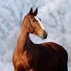 Клуб любителей лошадей