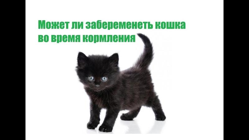 Может ли кошка забеременеть после родов