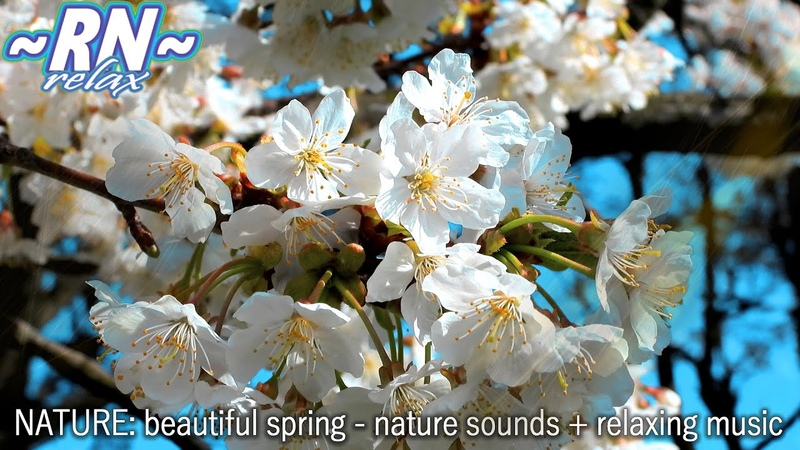 Антистресс Видео ПРИРОДА Красивая Весна Звуки Природы Лёгкая Музыка Релакс