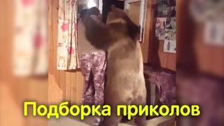 Подборка приколов 2018 / Лучшие приколы ноября / Отборные видео приколы