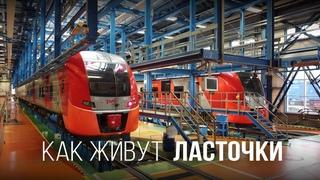 Разбираемся, как живут поезда Ласточки. Катаемся в кабине и смотрим депо в Адлере.
